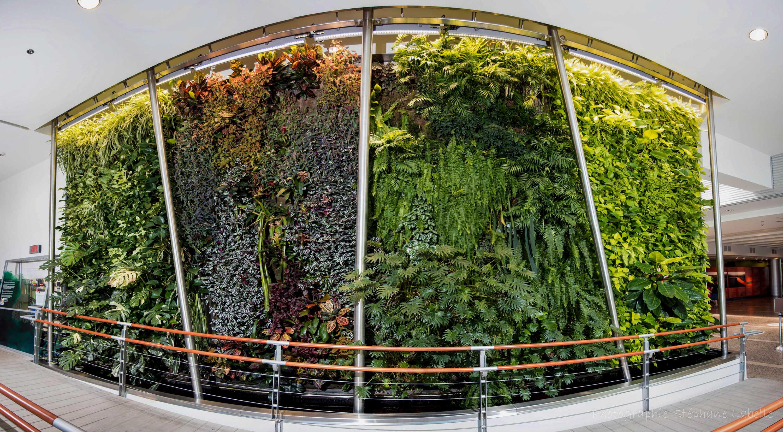Mur végétal Biodôme de Montréal